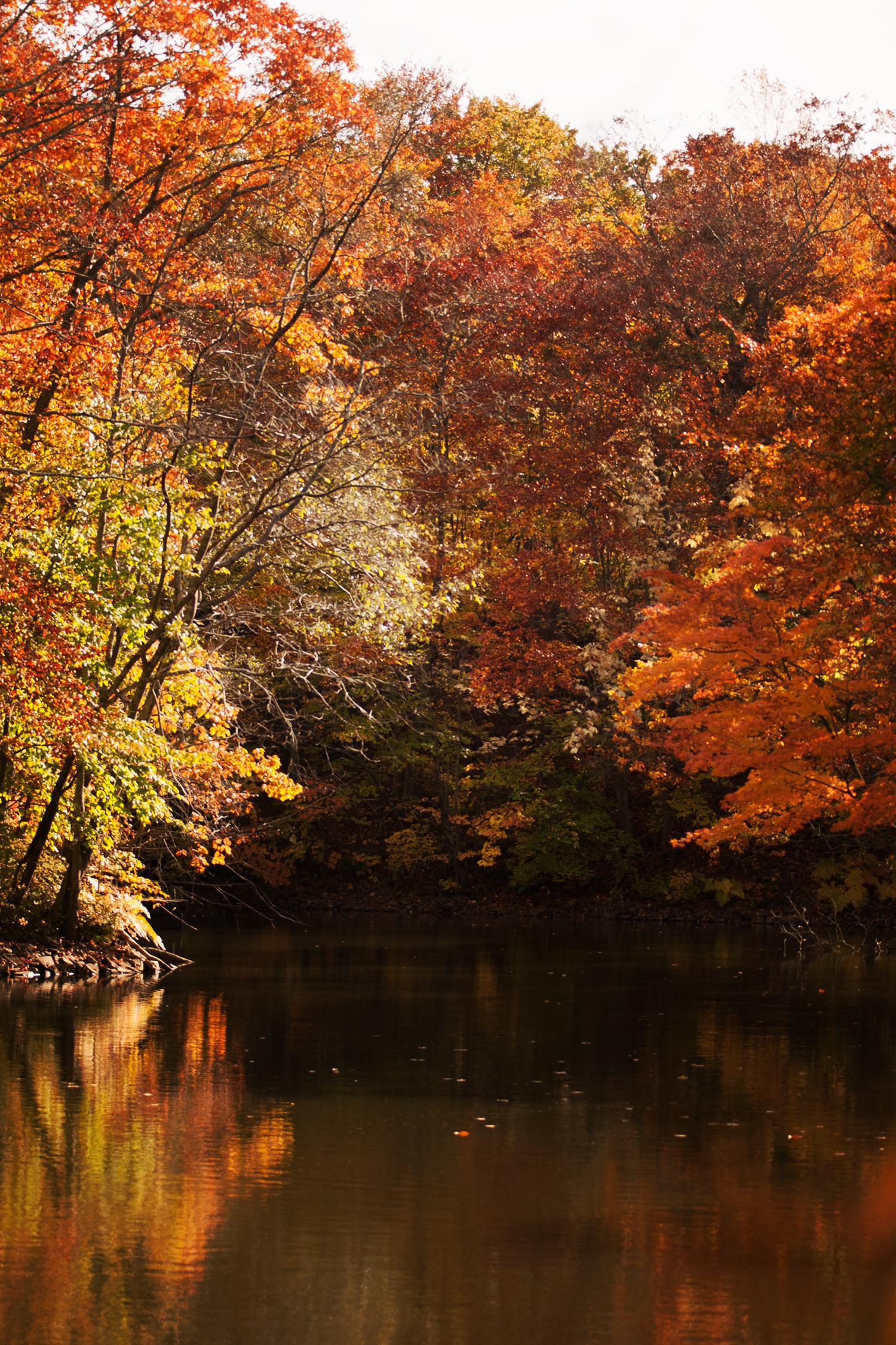 大沼の紅葉