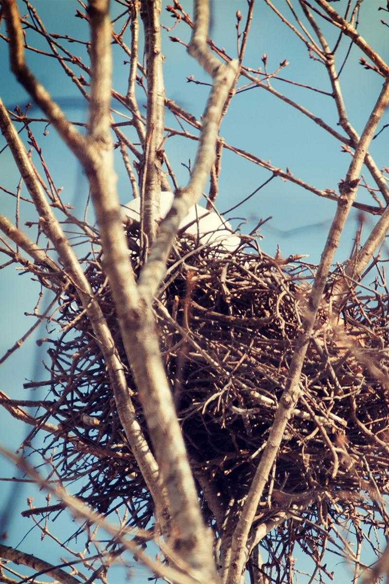 大沼の鳥の巣