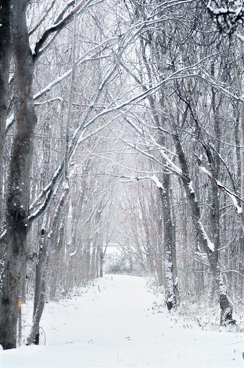 12月の森