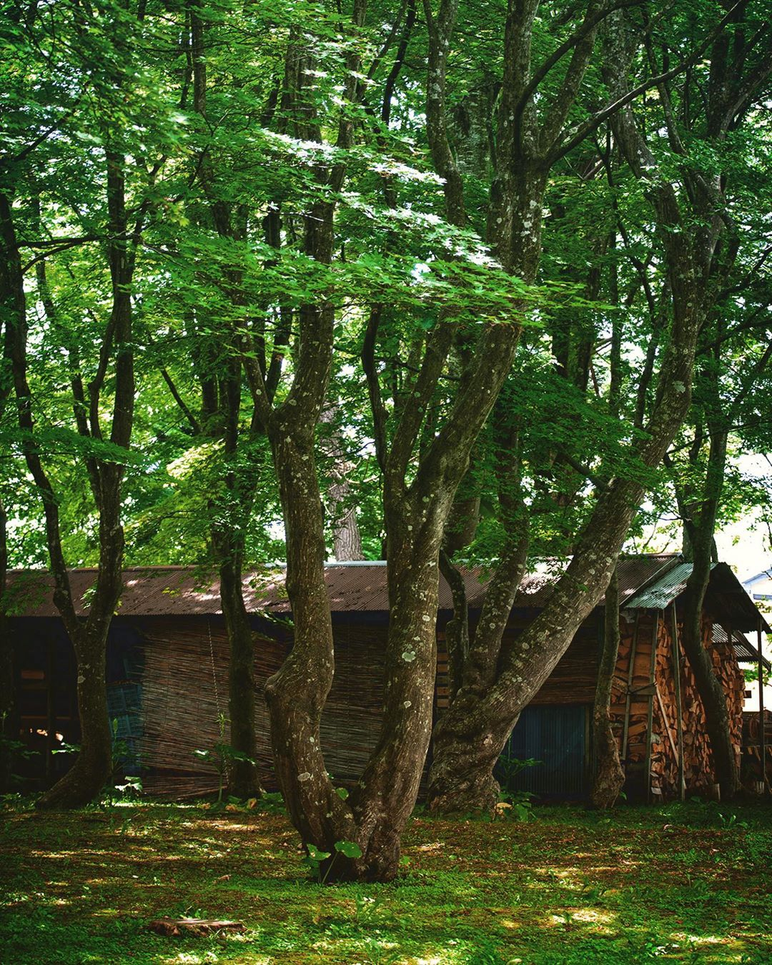 夏の薪小屋